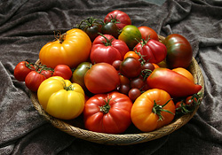 How to Choose the Best Tomatoes for Your Garden