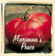 The World's Best Tasting Heirloom Tomato, Marianna's Peace